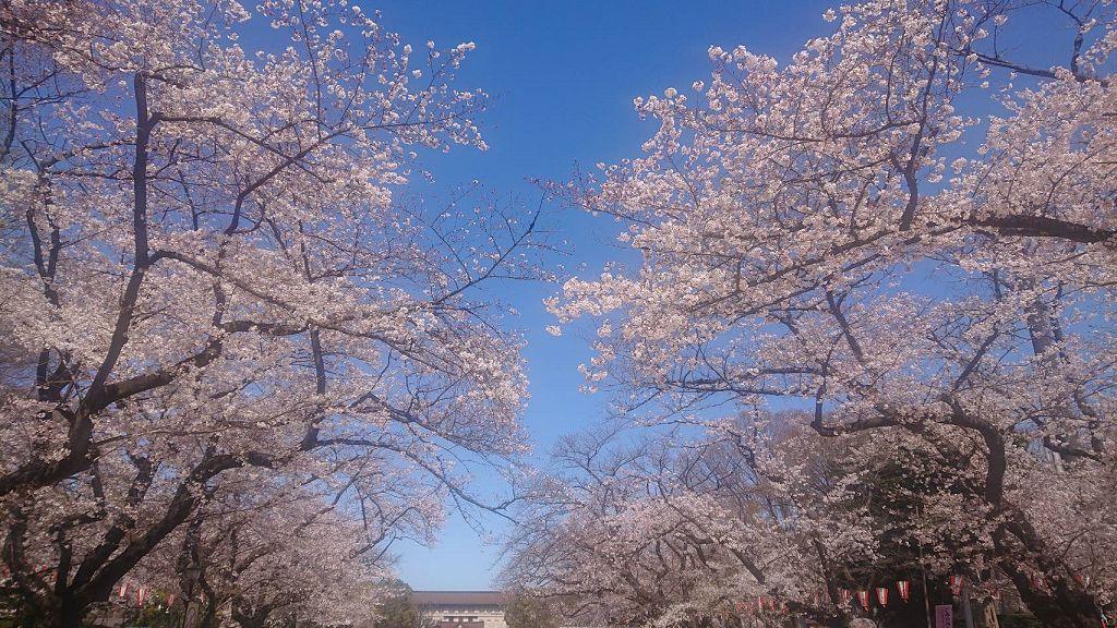 上野恩寵公園の桜