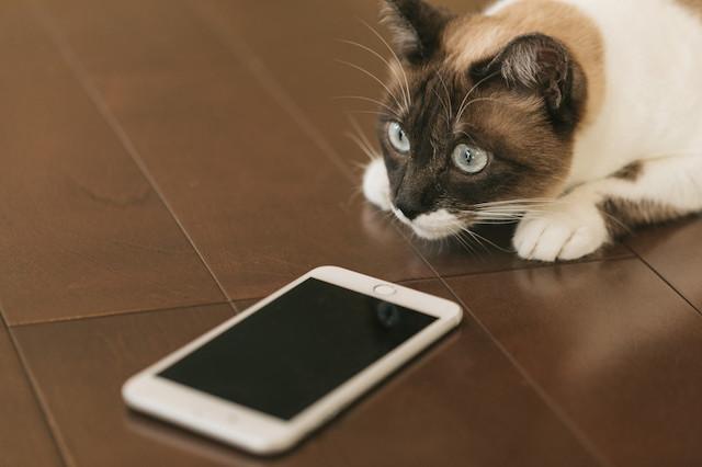 猫とスマホ